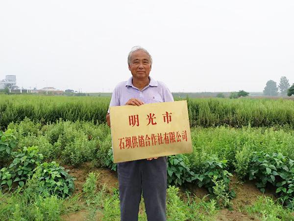 石坝供销合作社有限公司