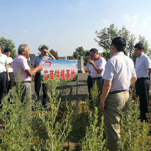 滁州市相关领导参观艾苗种植基地