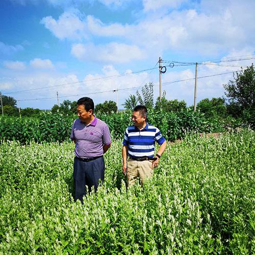 白米山王厂长与绿爱达成艾苗种植回收协议