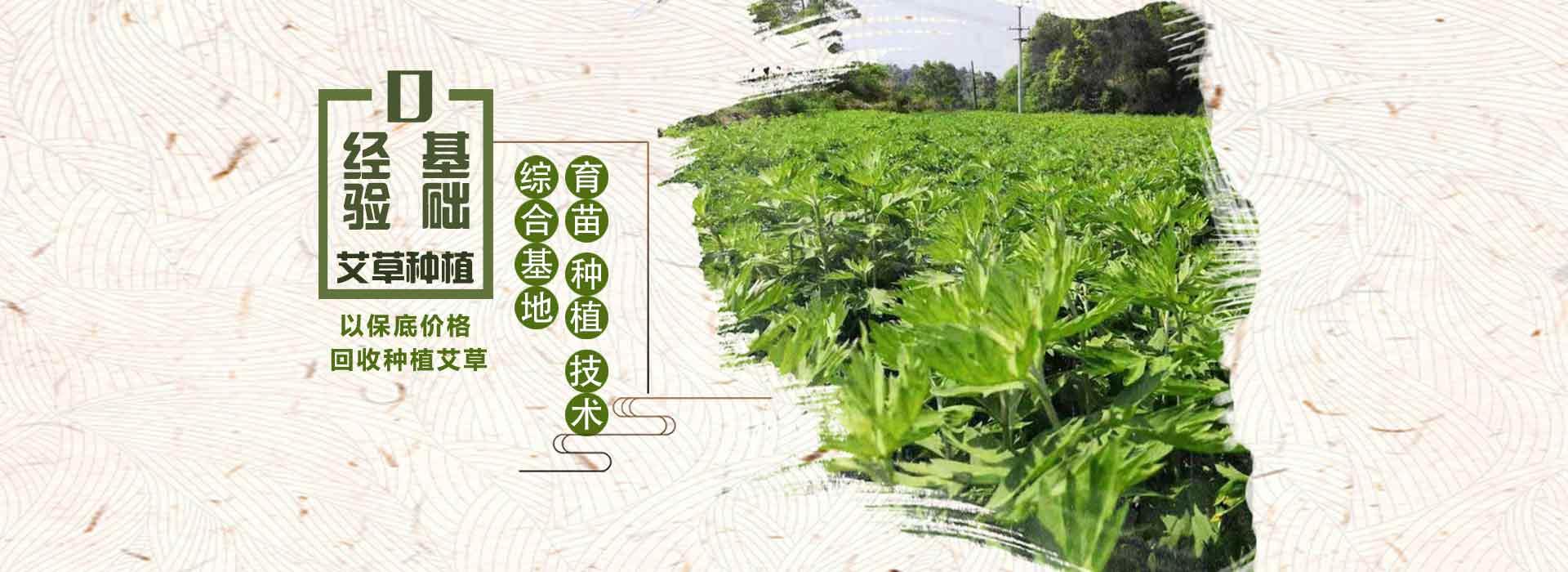 绿爱-全程提供9S种植技术服务
